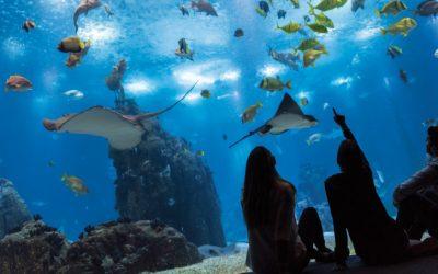TripAdvisor escolhe o Oceanário de Lisboa como o 'Melhor Aquário do Mundo'
