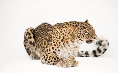Exposição Photo Ark traz o mundo animal a Lisboa