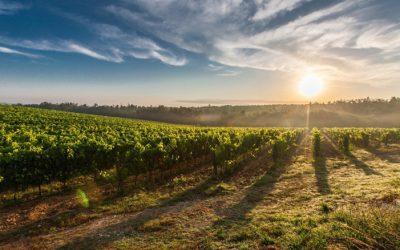 Um brinde ao vinho português
