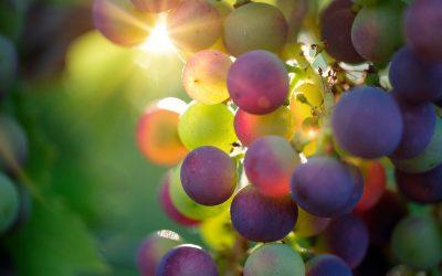 Brindemos para celebrar o Dia Nacional do Vinho